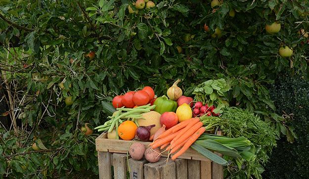 Biologische groente & fruit