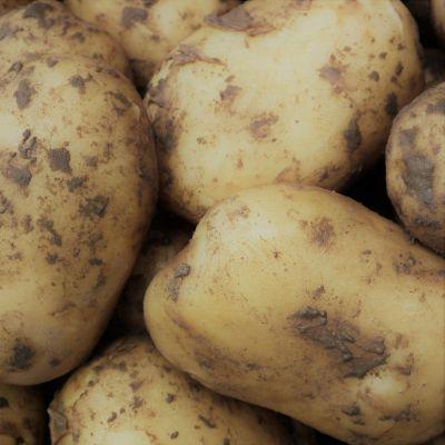 Agria aardappelen