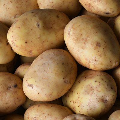Nieuwe oogst Spaanse Agria Frietaardappelen