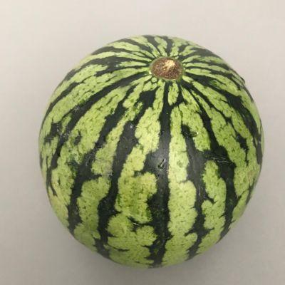 Biologische mini watermeloen