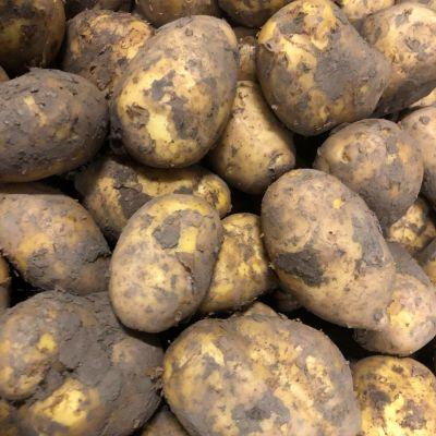 Meerlander aardappelen