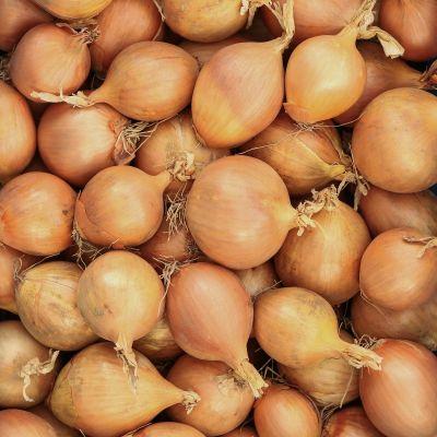 Nieuwe oogst uien