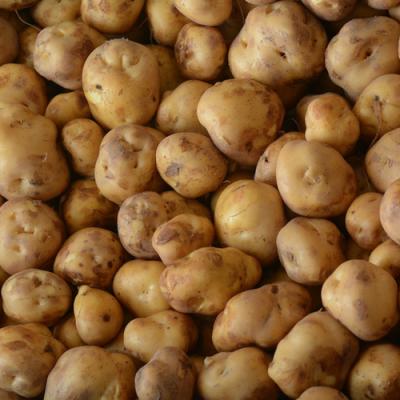 Opperdoezer aardappelen