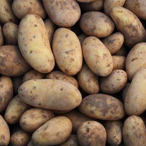 Nieuwe oogst nicola aardappelen