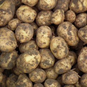 Frieslander aardappelen