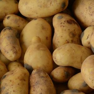 Goldmarie aardappelen