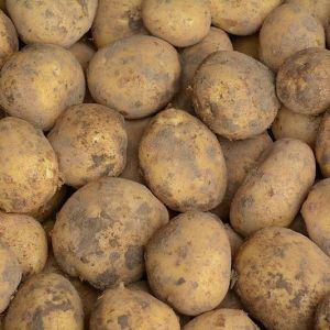 Zeeuwse dore aardappel