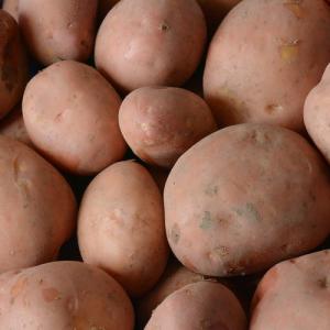Menopper® aardappelen