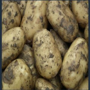 Bintje bonken aardappelen