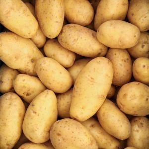 Spaanse Nicola aardappel