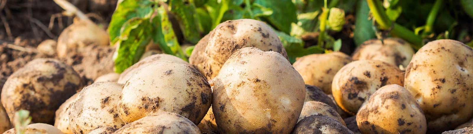 Geen gesjouw, Wij bezorgen aardappelen bij u aan huis!